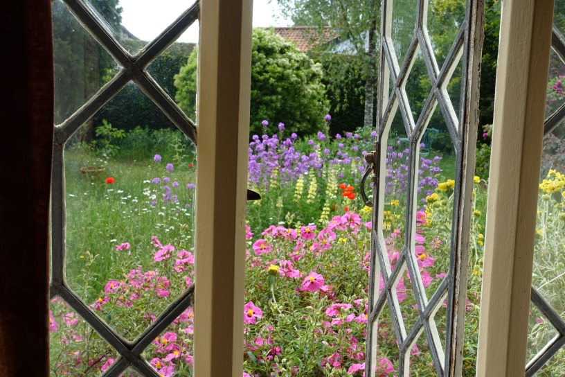 The view from the front window over wild area with purple sweet rocket, tree lupins, yellow phloxes and Cistus our-urea