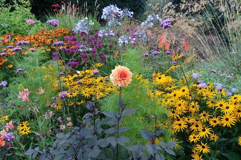 Late summer border to prolong the season of colour
